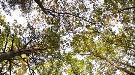 Forêt de la Couture Boussey